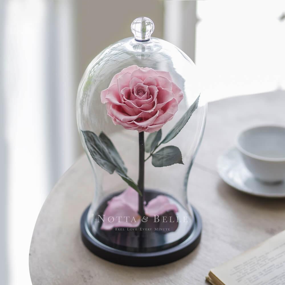 Розовая роза в колбе Premium X
