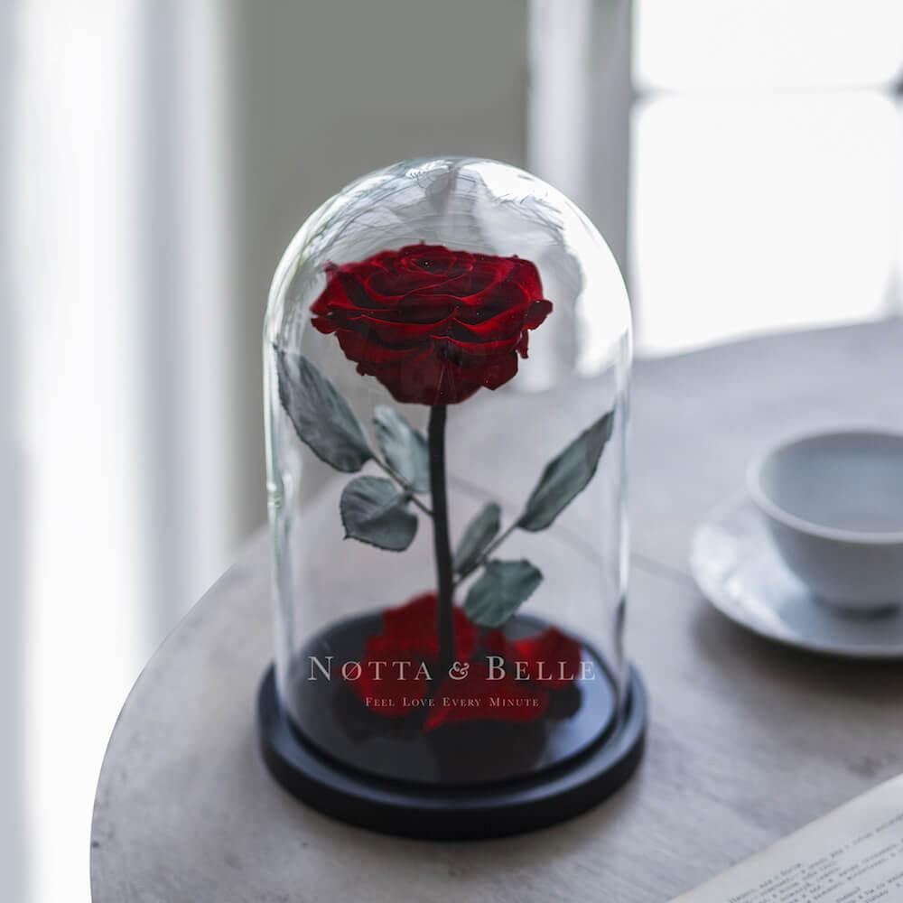 Premium burgundy Rose