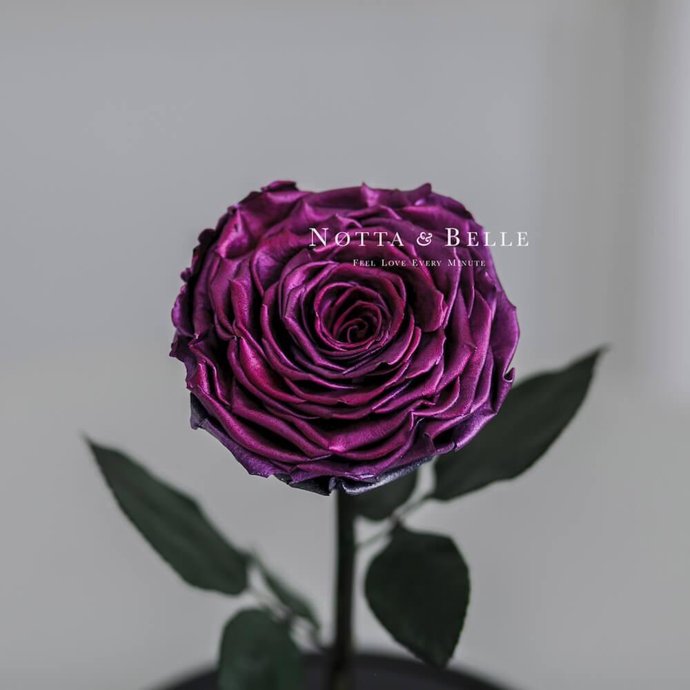 Сливовая роза в колбе - King