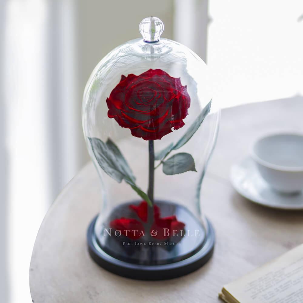 Premium X burgundy Rose