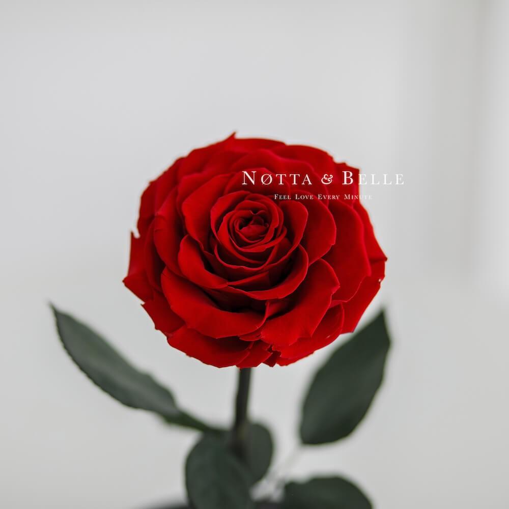 Premium červená Růže ve skle