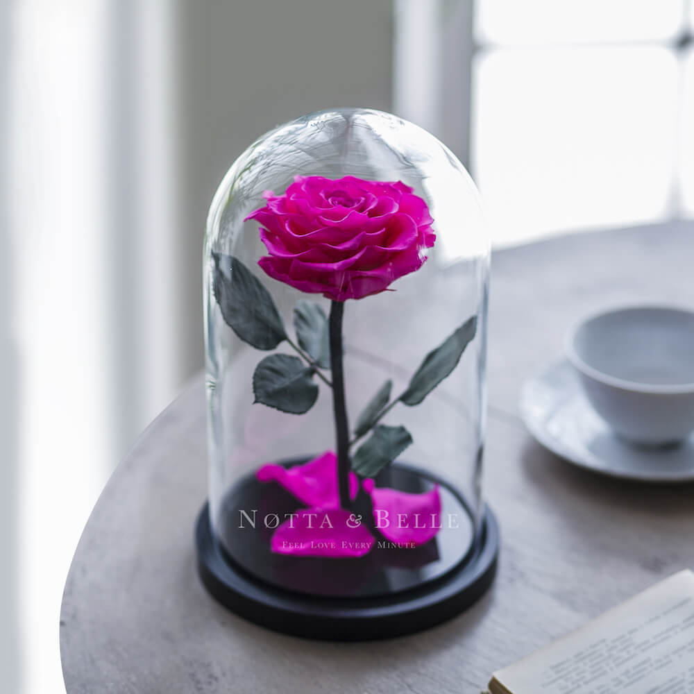 forever bright pink rose in glass dome - premium