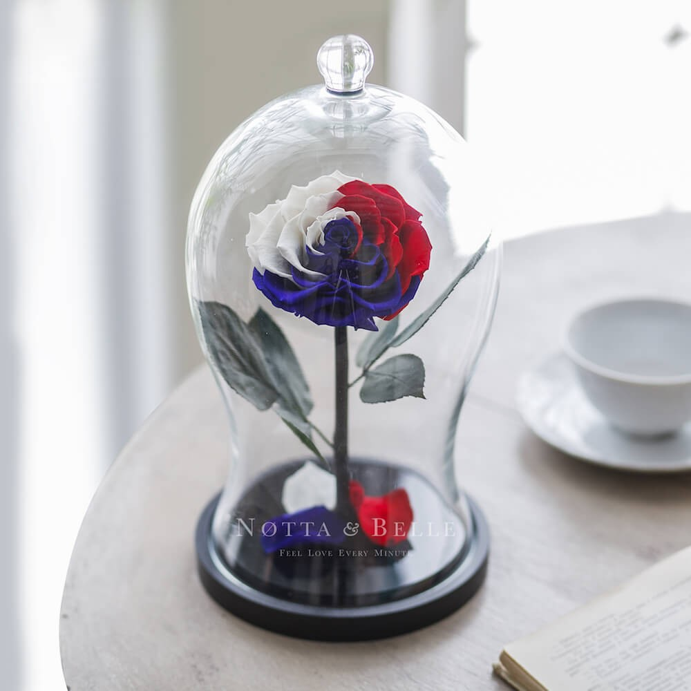 Роза в колбе Флаг России - Premium X