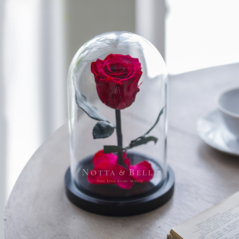 forever fuchsia rose in glass dome - mini