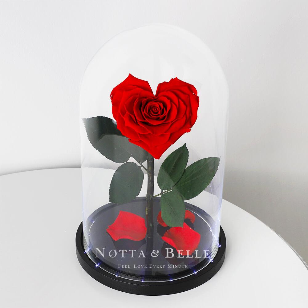 Красная роза King в форме сердца с подсветкой