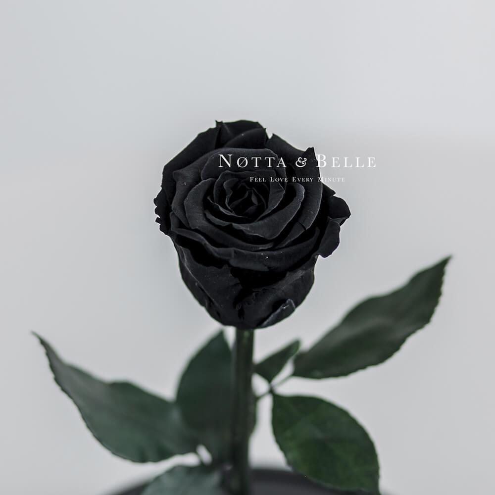 Mini Schwarz Rose