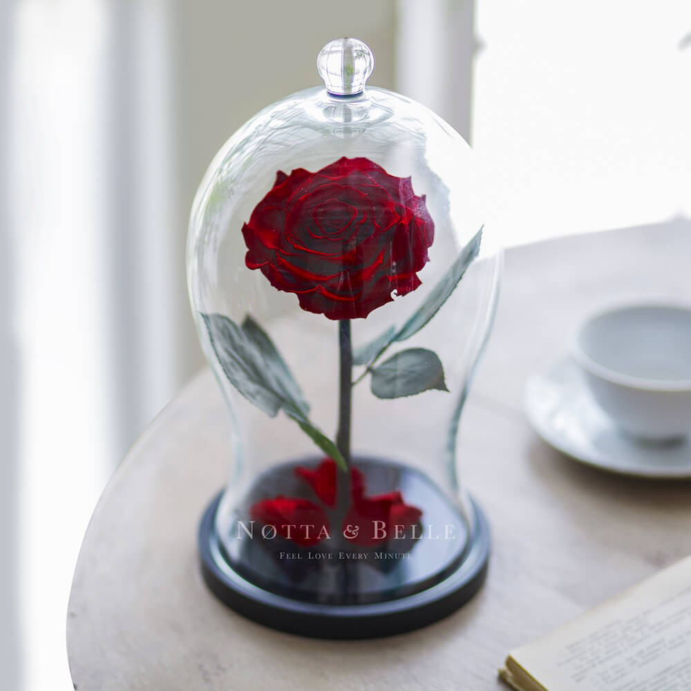 Rosa Borgoña Premium X