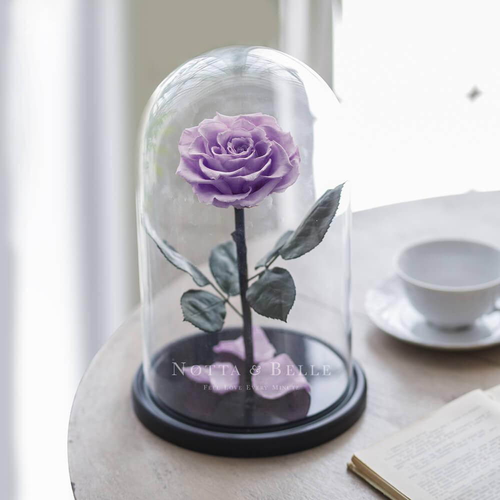 King levandulová Růže ve skle