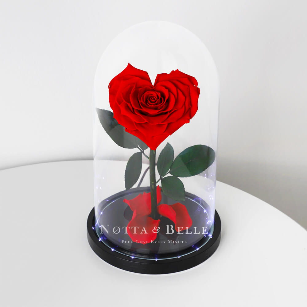 Krasnaya roza Premium v forme serdca s podsvetkoy
