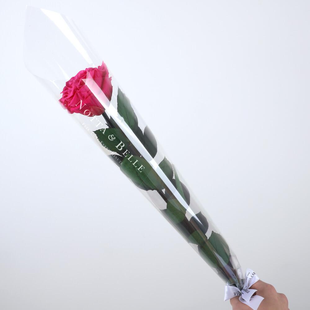 Роза на стебле цвета фуксии - Premium