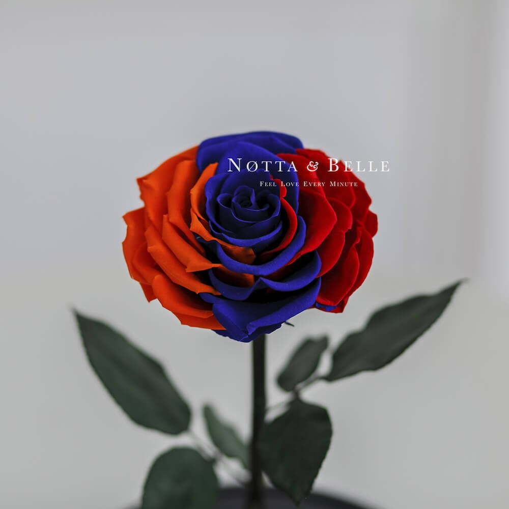 Роза в колбе Флаг Армении - Premium X