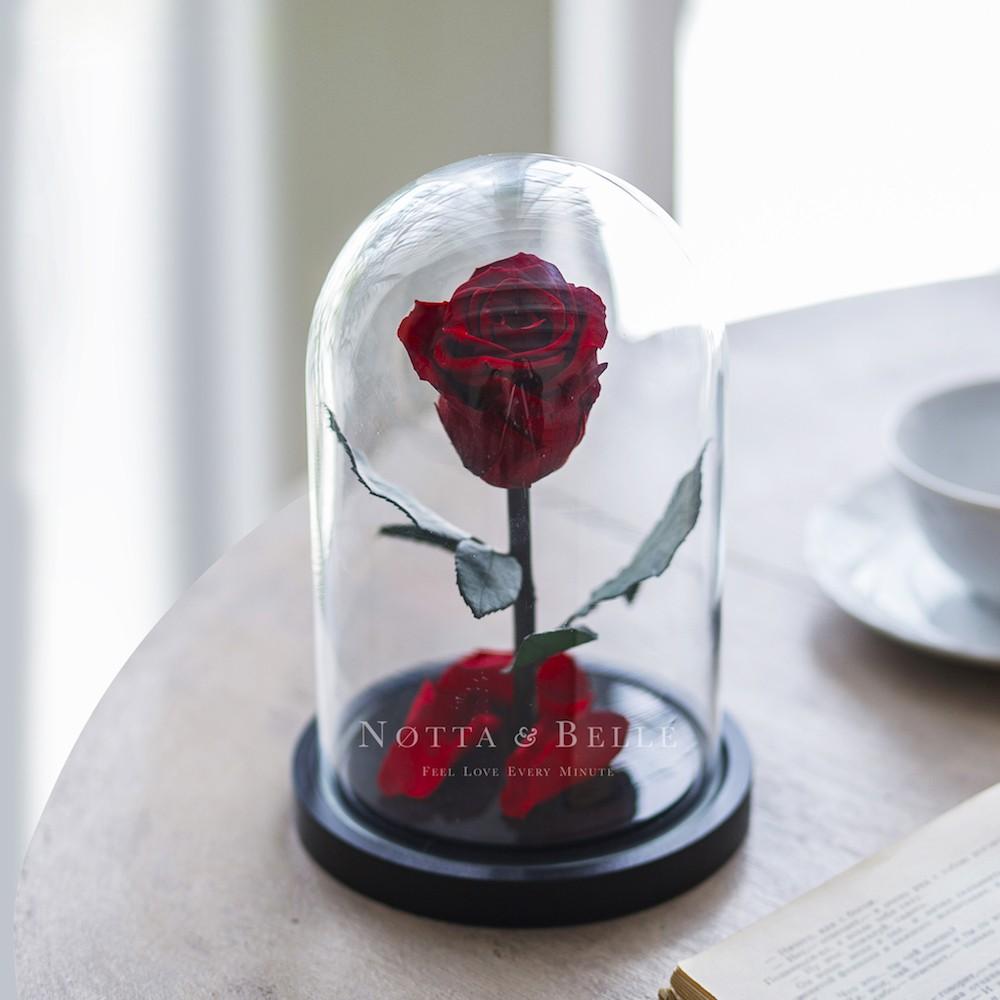 Mini vínově červená Růže ve skle