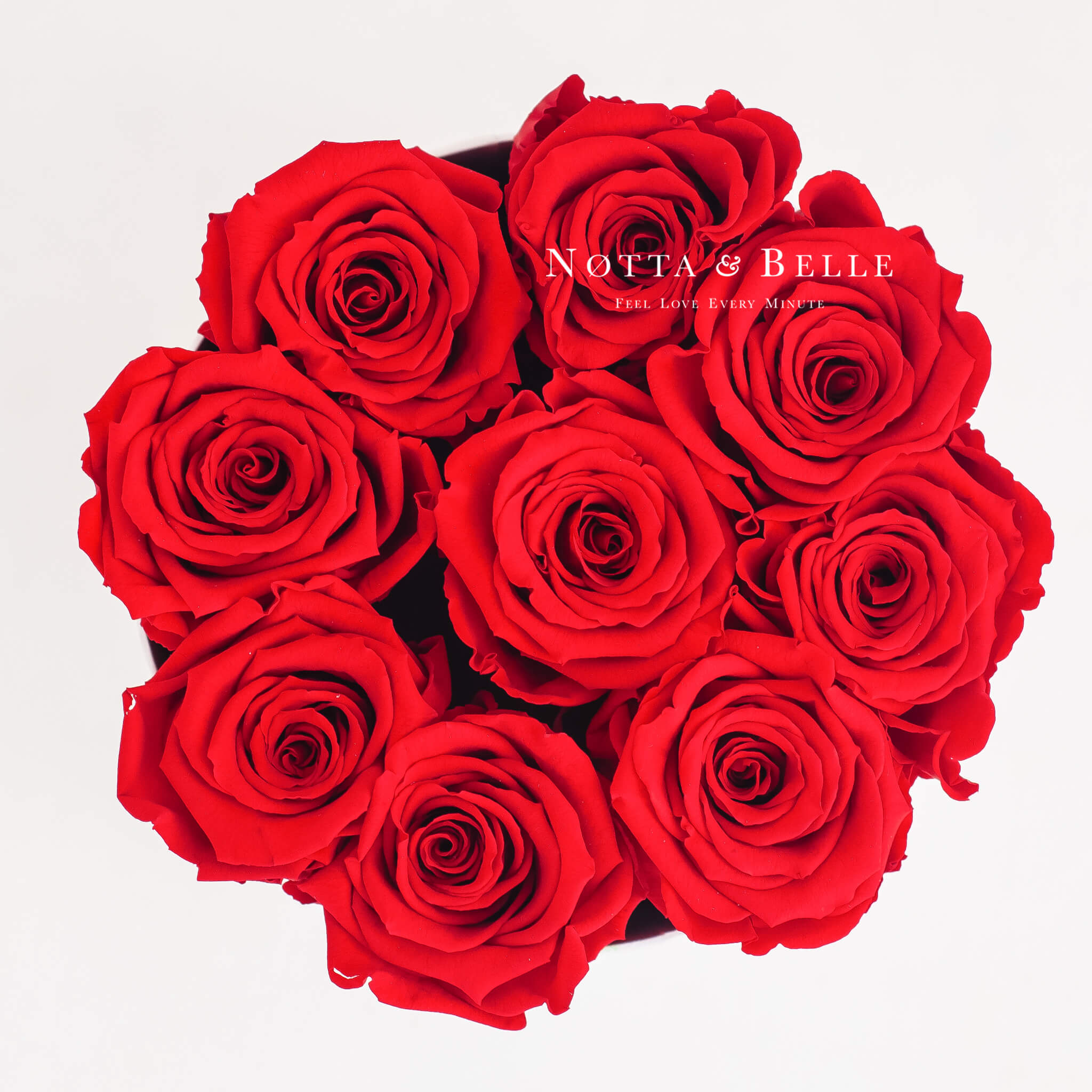 Forever Red roses in round black box - 9 roses