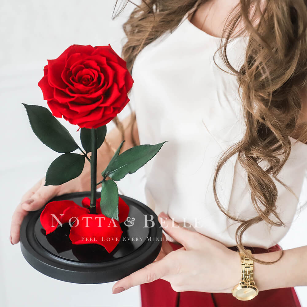 Preserving red roses in a jar