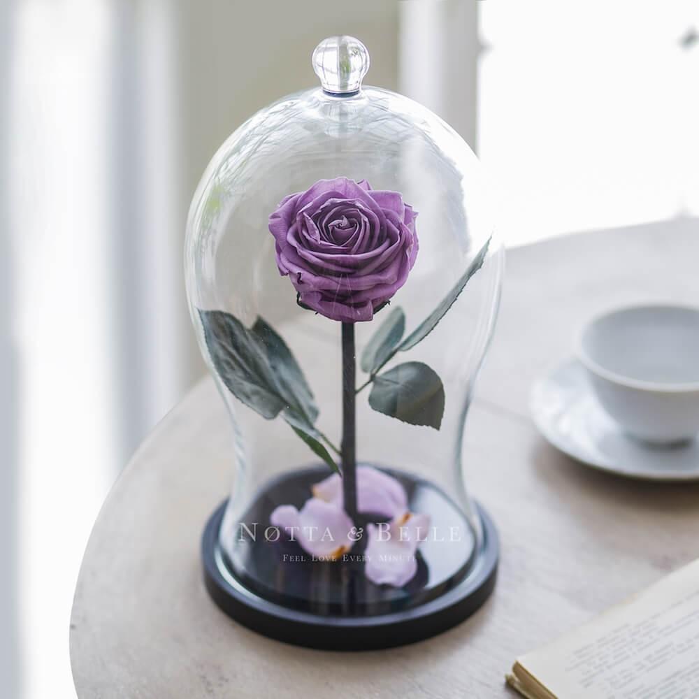 acheter une rose ternelle lavande premium x sous cloche. Black Bedroom Furniture Sets. Home Design Ideas