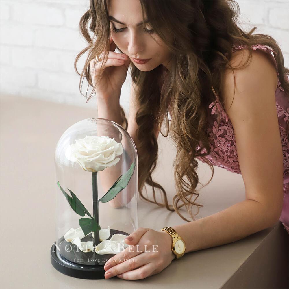Premium white Rose