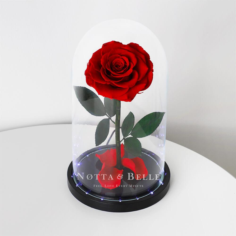 Красная роза в колбе Premium с подсветкой