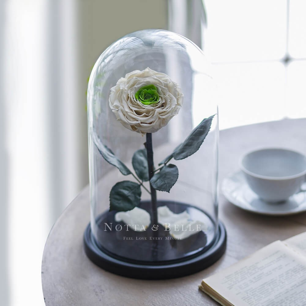 Бело-зеленая роза в колбе - King