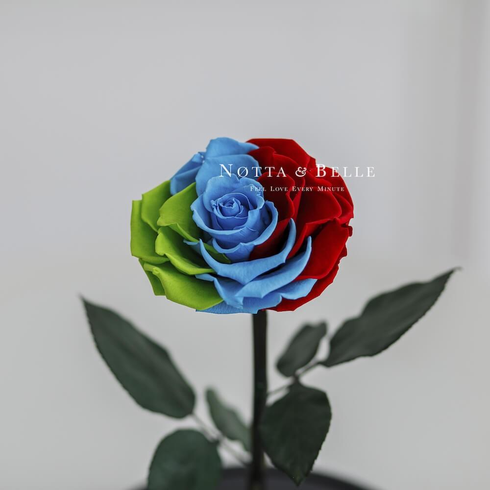 Роза в колбе цвета флага Дагестана - King