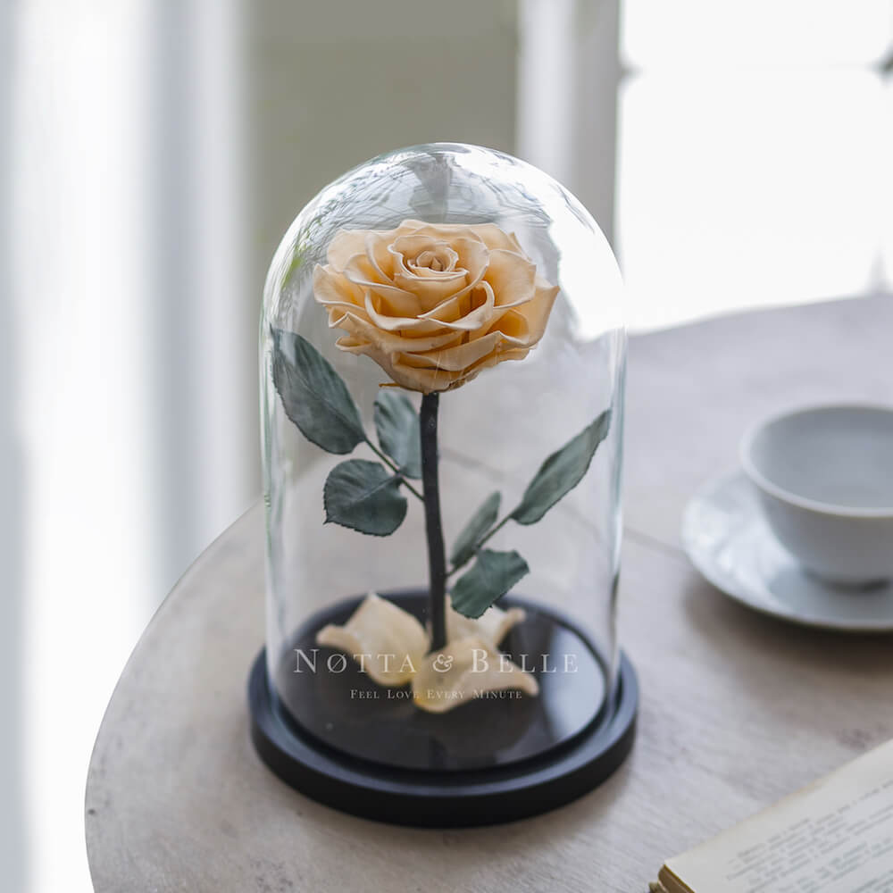 forever chamagne rose in glass dome - premium