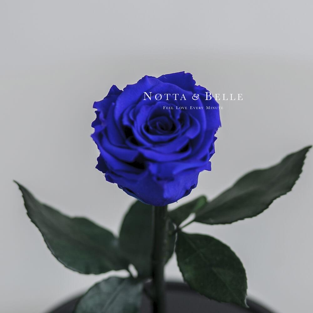 Mini modrá Růže ve skle