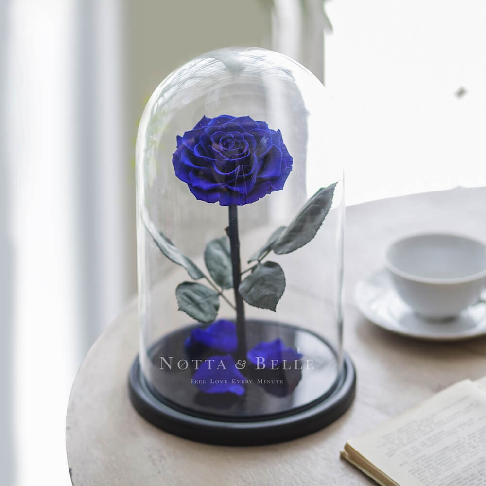 blue rose in glass dome - king