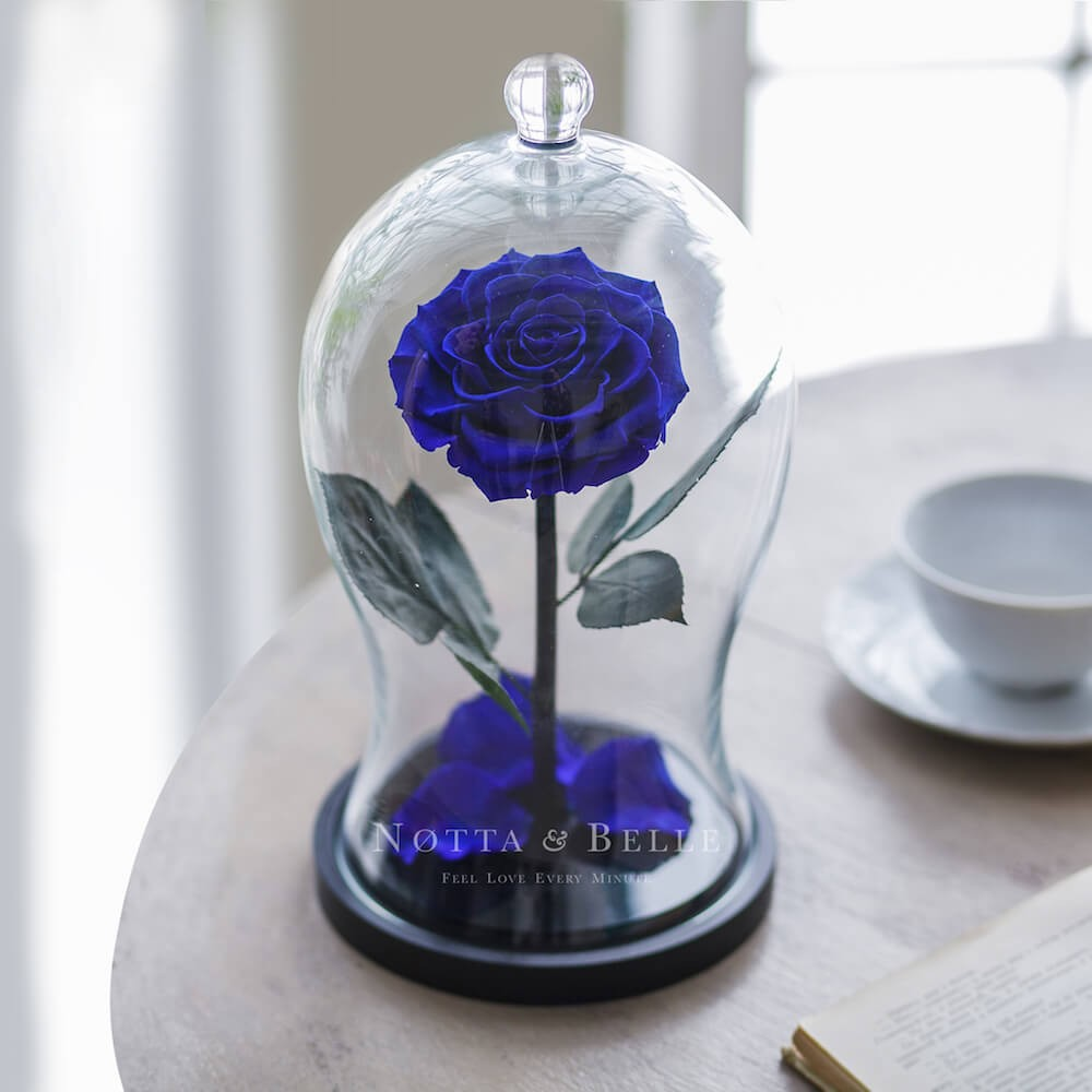 blue rose in glass dome - premium x