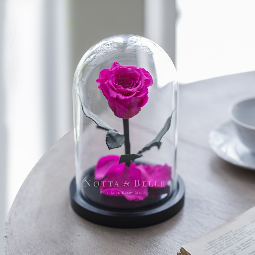 bright pink rose in glass dome - mini