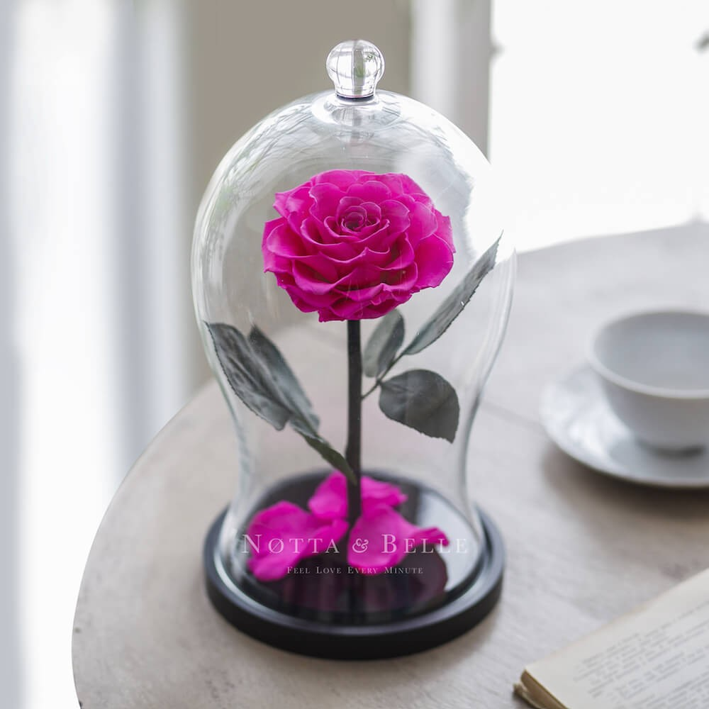bright pink rose in glass dome - premium x