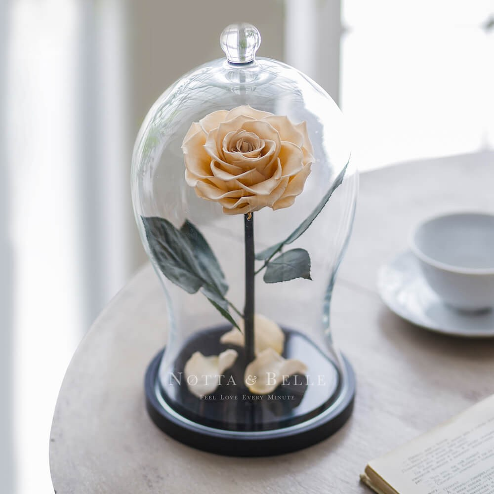chamagne rose in glass dome - premium x