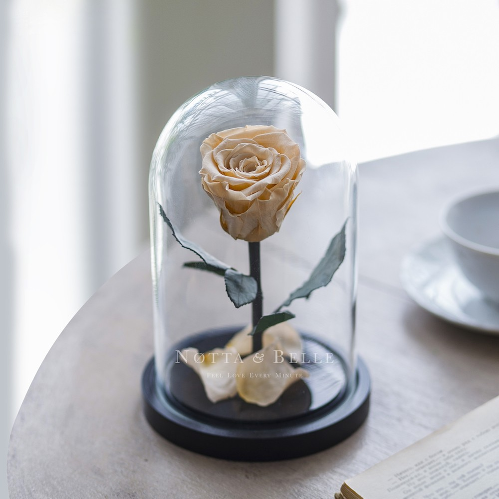 champagne rose in glass dome - mini