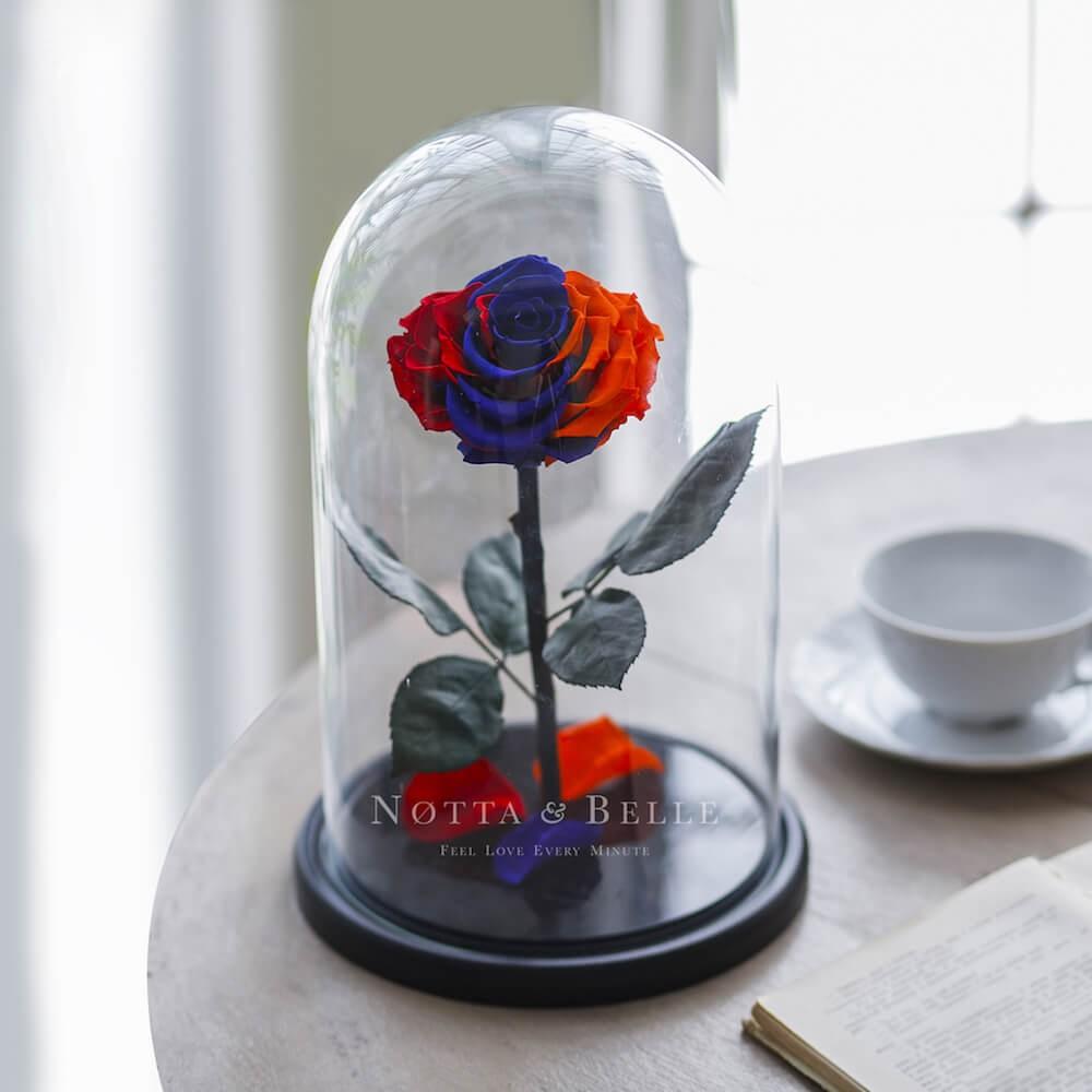 Роза в колбе цвета флага Армении - King