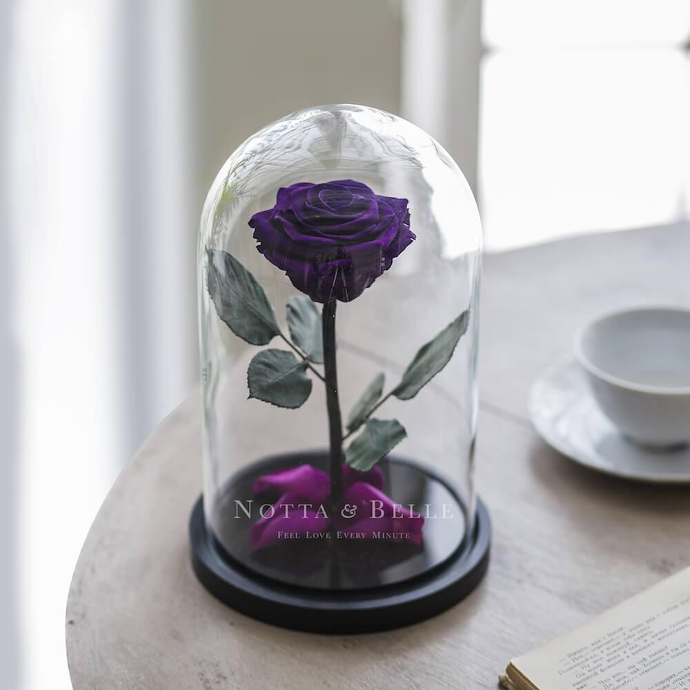Premium fialová Růže ve skle