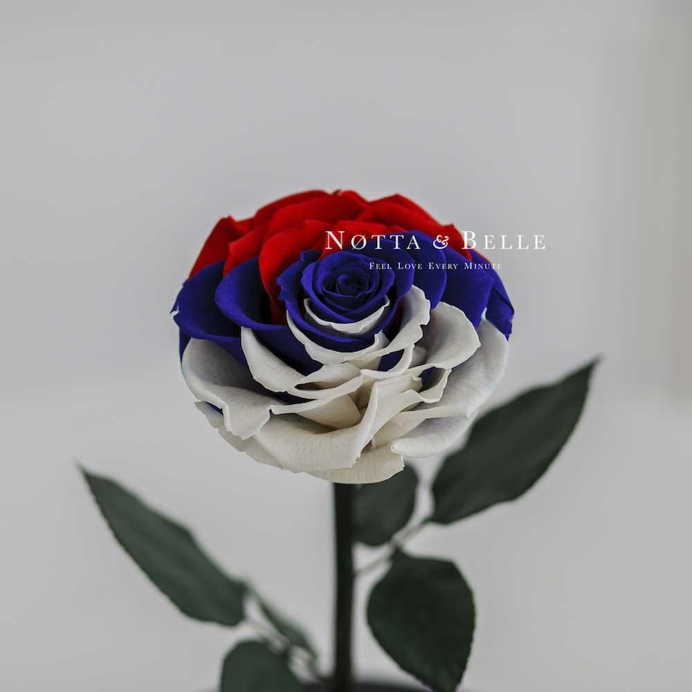 Роза в колбе цвета флага России - King