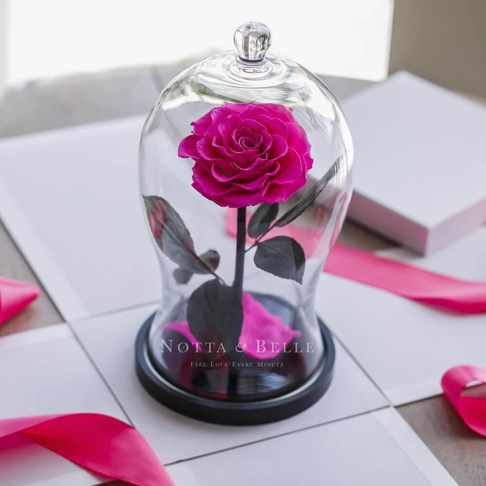 Boîte cadeau Blanches pour Rose sous cloche