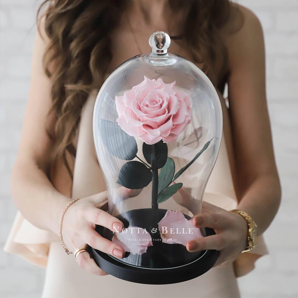 Premium X zart rosa Rose