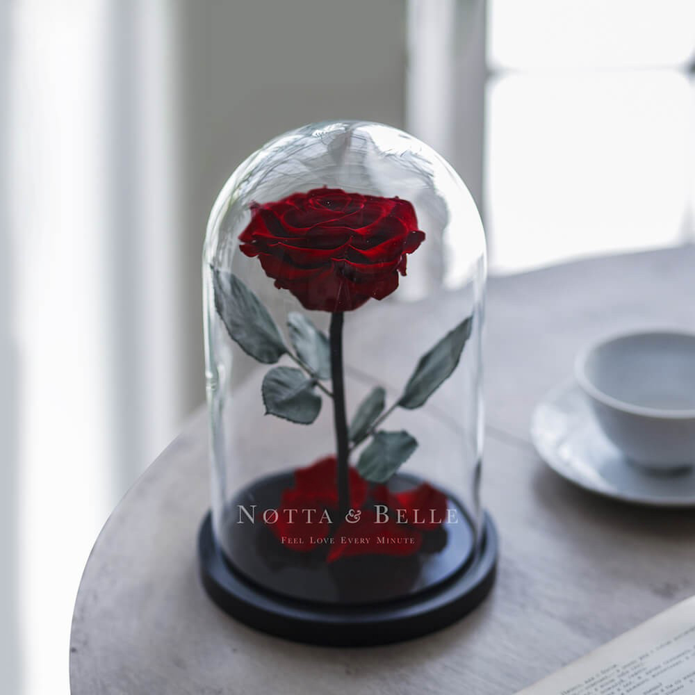 Бордовая роза в колбе Premium