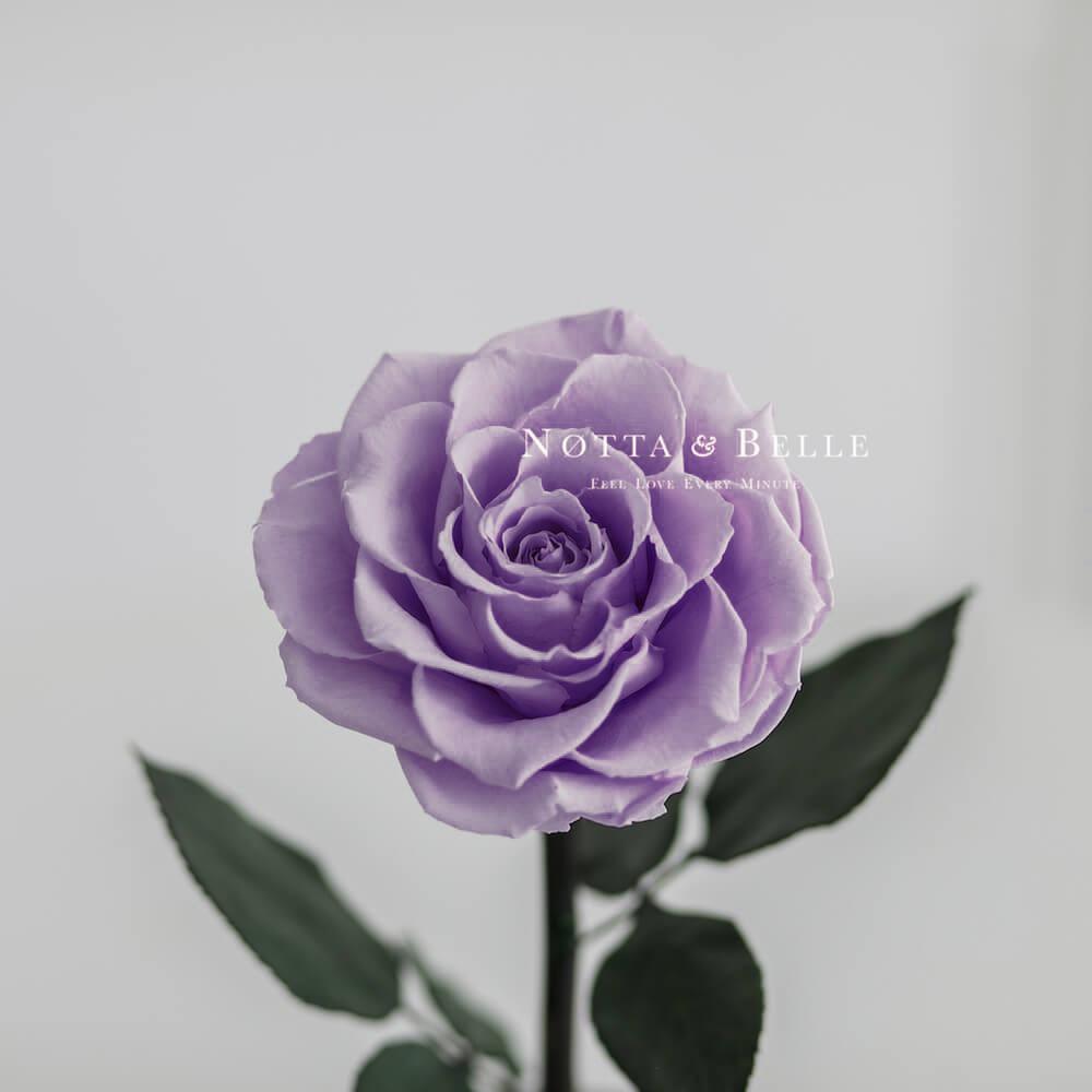 Лавандовая роза в колбе King