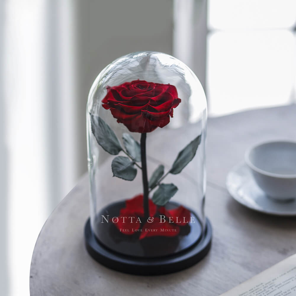 forever burgundy rose in glass dome - premium