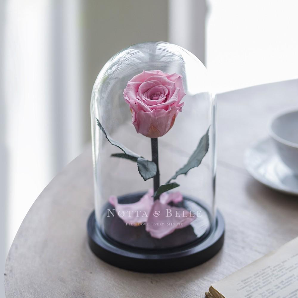 Mini jemně růžová Růže ve skle