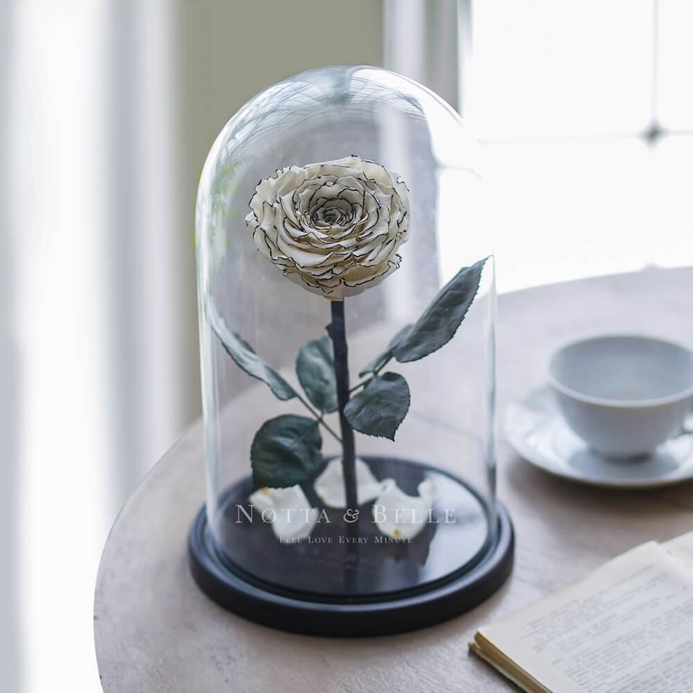 Бело-черная роза в колбе - King