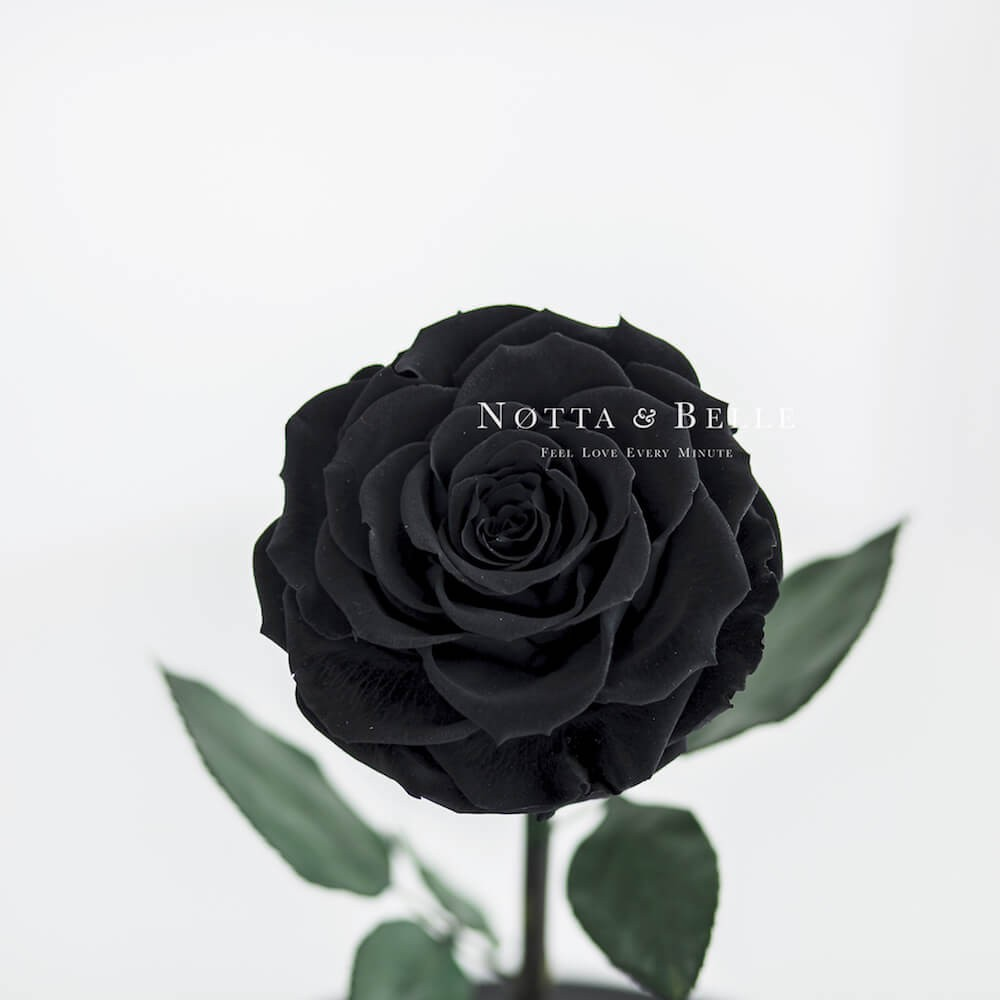 forever black rose in glass dome - premium x