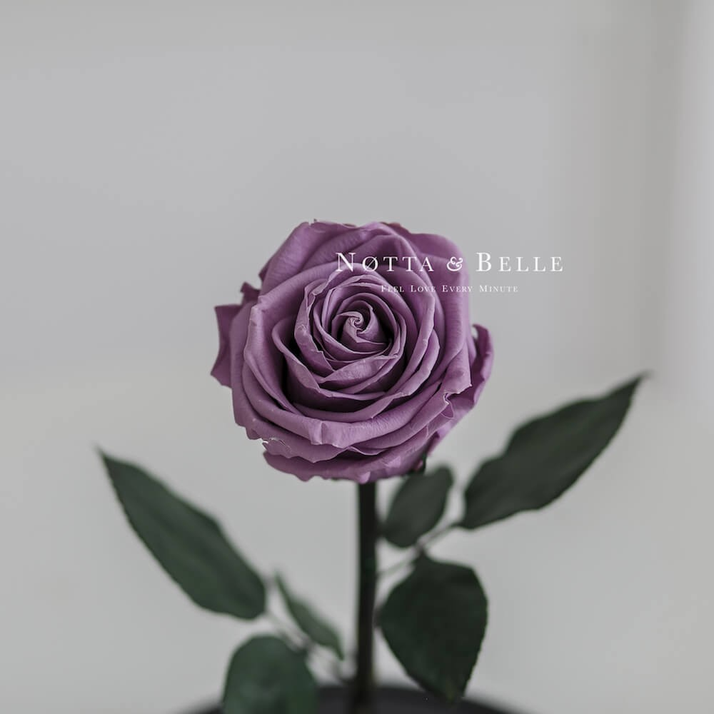 forever-lavender rose in glass dome - premium x