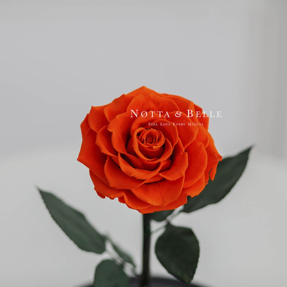 forever orange rose in glass jar