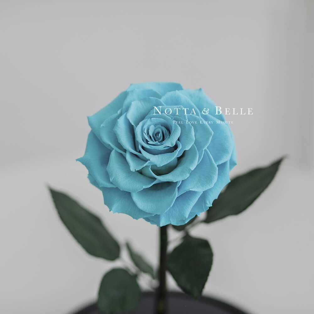 forever turquoise rose in glass dome - premium x