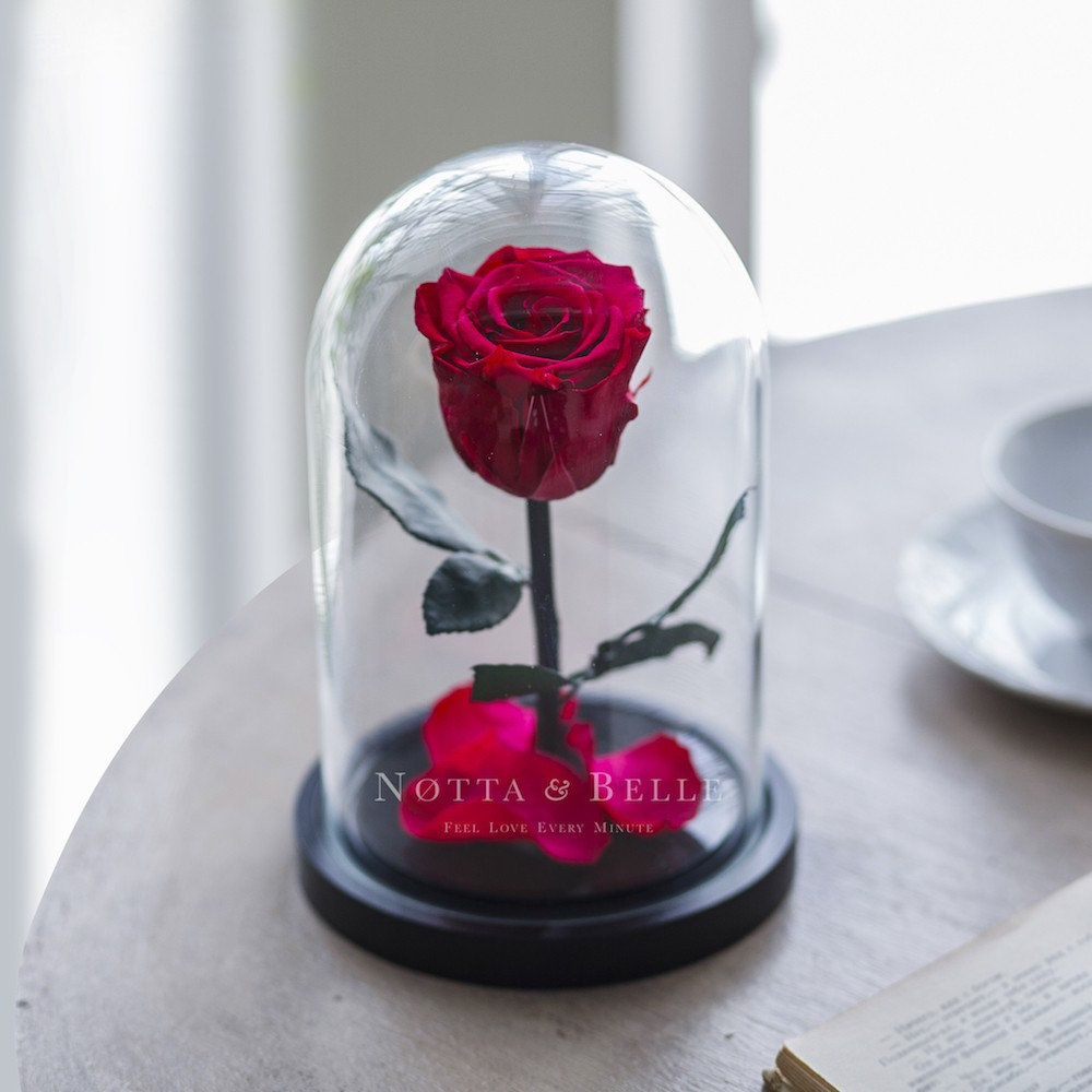 fuchsia rose in glass dome - mini