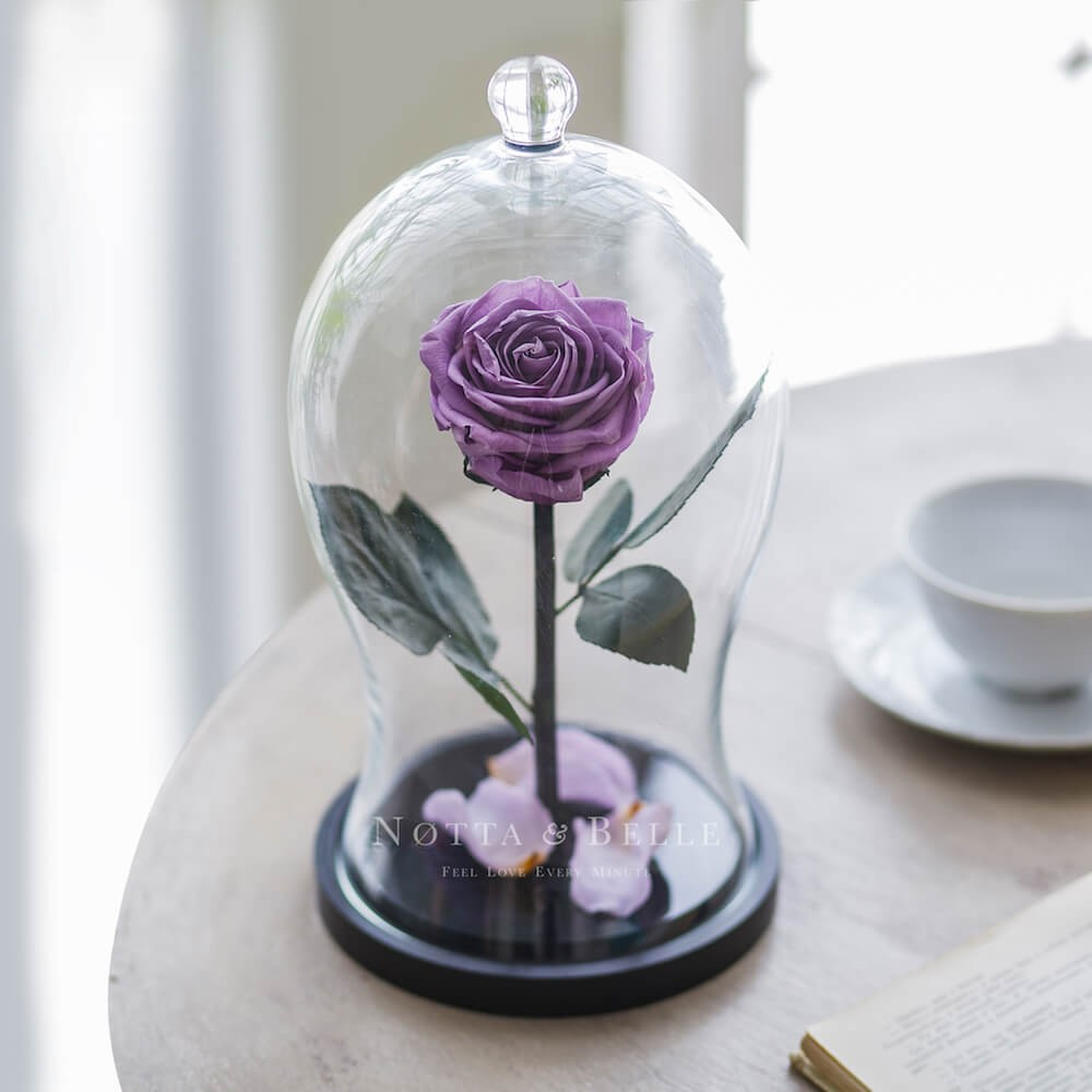 lavender rose in glass dome - premium x
