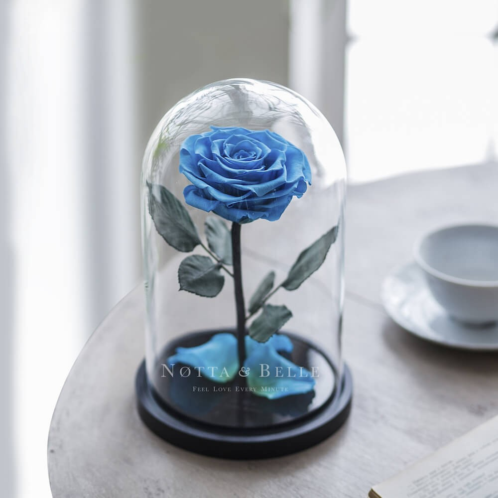 light blue rose in jar
