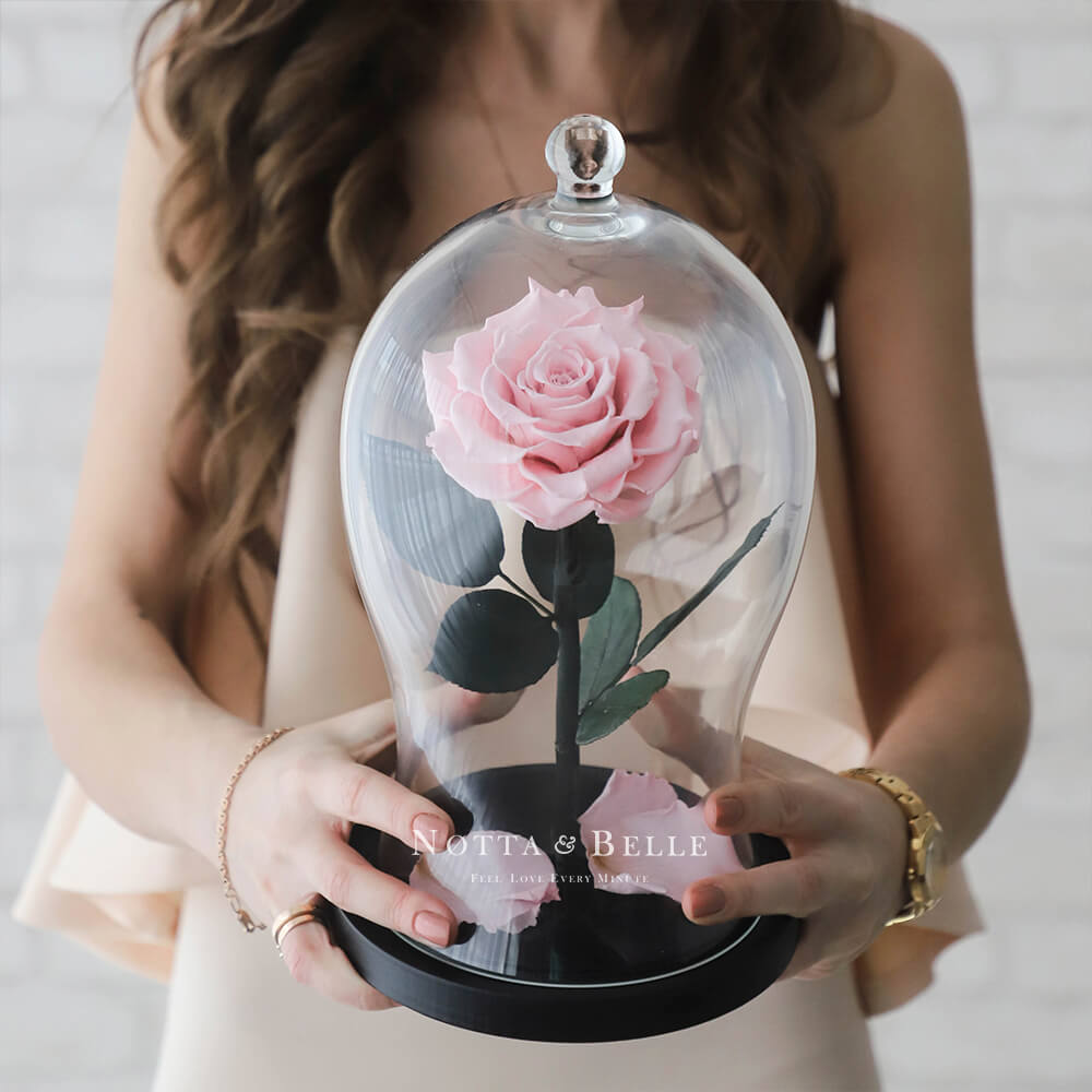 light pink rose in dome - premium x