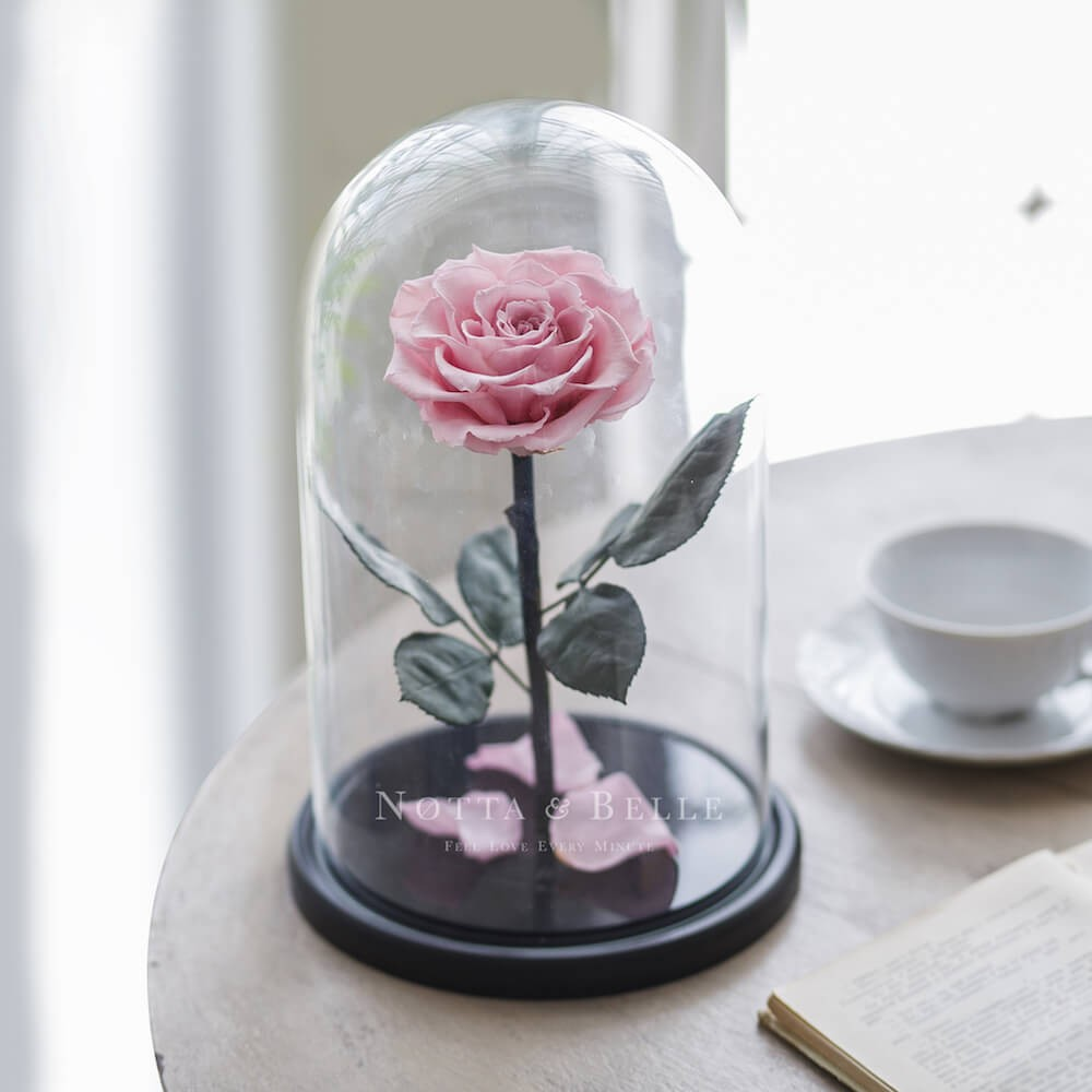 light pink rose in glass dome - king